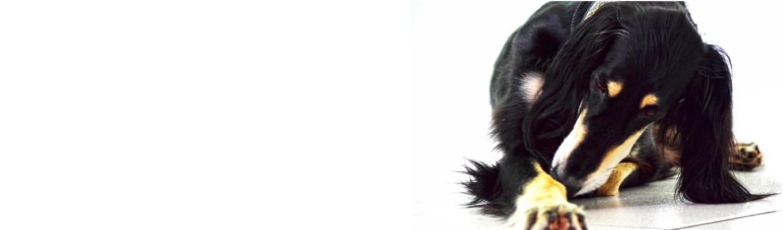 medicina veterinaria milano malpensa dh vet 1019