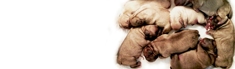 cura del cane_benessere del gatto veterinario milano dhvet